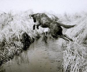 asia, dog, and river image