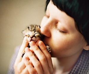 baby cat, love, and kitten image