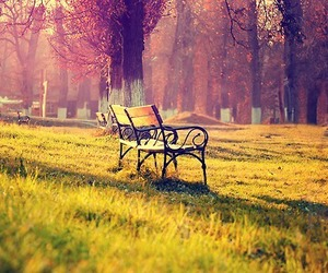 nature, autumn, and bench image
