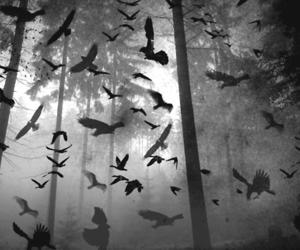 bird, forest, and dark image