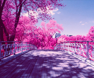 pink, beautiful, and bridge image