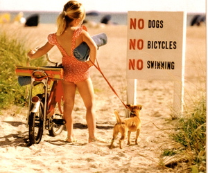animal, beach, and bicycles image