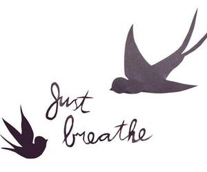 bird, breathe, and just breathe image