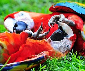 animal, bird, and colors image