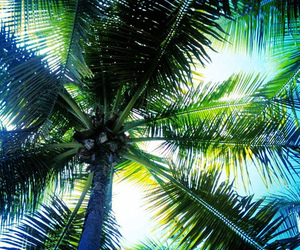 palms, summer, and green image