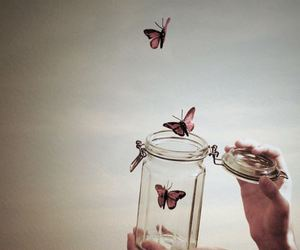 butterfly, freedom, and free image