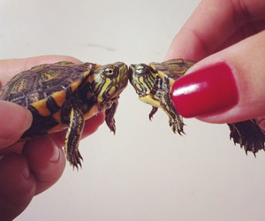 turtle, cute, and love image