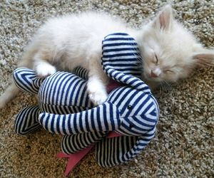 adorable, baby kitty, and fluffy kitten image