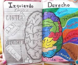 brain, colors, and left image
