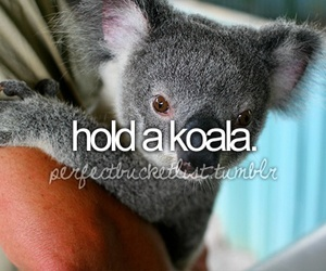 Koala, before i die, and bucket list image