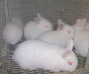 bunny, pale, and rabbit image