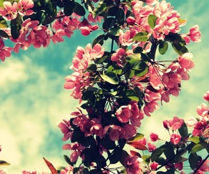 canon, flowers, and nature image