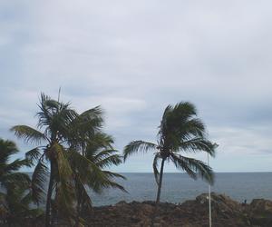 bahia, brasil, and coconut image