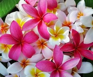 blossoms, hawaii, and natural image