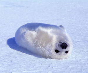 seal, cute, and animal image