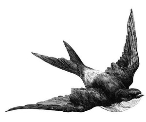bird, drawing, and swallow image