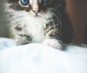 big eyes, cat, and cute image