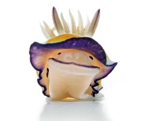 sea slug image