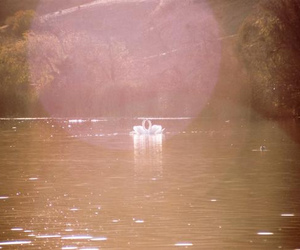 film, swans, and light image