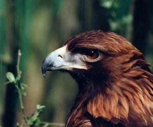 eagle, animal, and bird image