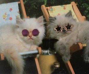 cats, glasses, and cute image