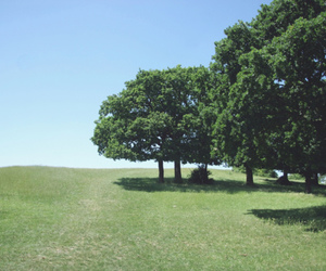 trees, grass, and landscape image