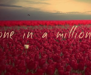 million, flowers, and one image