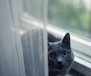 cat, window, and eyes image