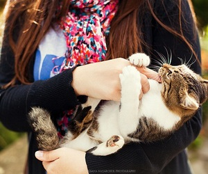 girl, adorable, and cat image