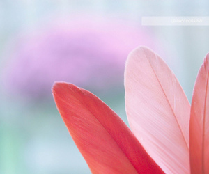 feather, pink, and pretty image