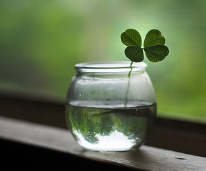 green, luck, and lucky image