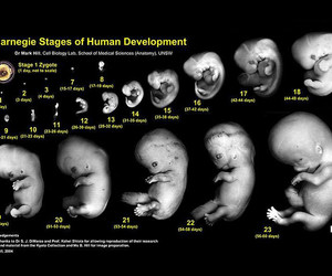 first pregnancy, stages of pregnancy, and pregnancy stages image
