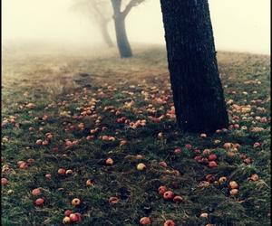 apple, tree, and autumn image