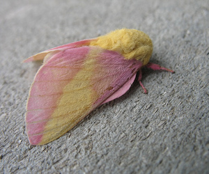ew, insect, and moth image