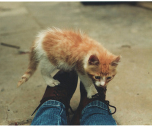 cat, kitten, and shoes image