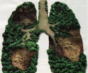 nature, forest, and lungs image