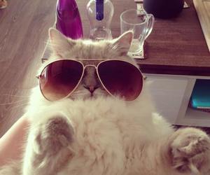 cat, animal, and sunglasses image
