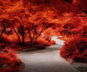 forest, nature, and red image
