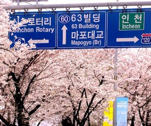 sakura, beautiful, and korea image
