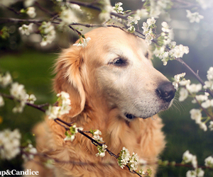 dog and cute flowers image