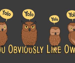 owl, yolo, and funny image