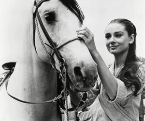 audrey hepburn, horse, and black and white image