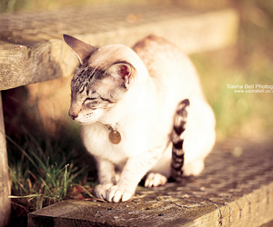 animal, cat, and sasha bell image