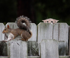 funny, cat, and squirrel image