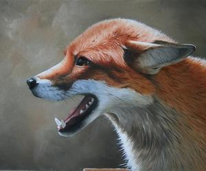fox drawning image