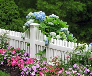 garden, beautiful, and flowers image