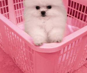 dubtrackfm, pink, and dog image