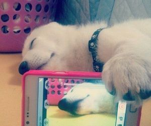 dog, mobile phone, and cute image