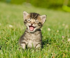 cat, animal, and smile image