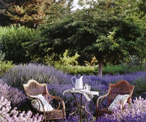 flowers, lavender, and garden image